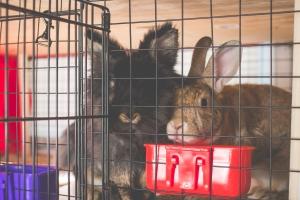 Emerson and Boris - House Rabbits