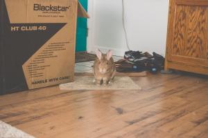 Boris - House Rabbit